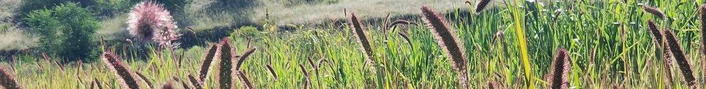 reeds+in+the+sun.jpg